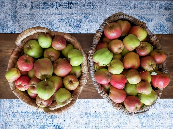 From a birds eye view, two large wicker baskets sit atop a narrow barn wood coffee table. They are overflowing with apples that range in color and size from different reds to greens. These apples are going to be used to make apple cider vinegar (ACV).