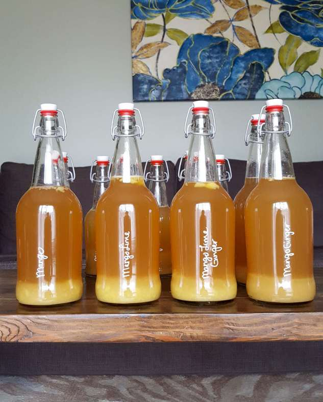 """An assortment of EZ Cap bottles lined up with the 32 ounce bottles in front and the 16 ounce bottles hiding in the back full of finished """"Mango,"""" """"Mango Lime,"""" """"Mano Ginger,"""" and """"Mango Lime Ginger"""" flavored kombucha. The pureed fruit has settled on the bottom of the bottles showing a golden milk hue. They are sitting on a dark wood coffee table with a couch and floral painting in the background."""