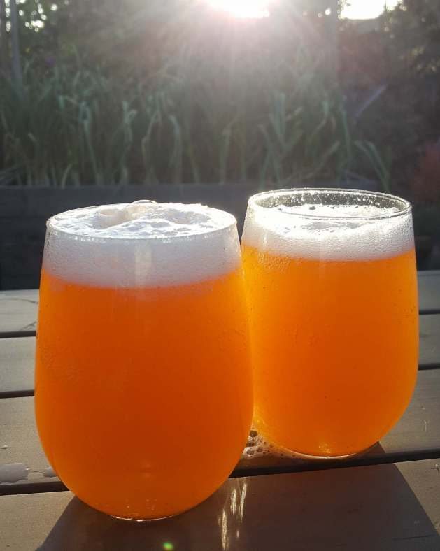 Two stemless wine glasses full of recently poured kombucha sit basking amongst the glow of a setting sun on an outdoor patio table. The foam and effervescence of the kombucha is visible and a garden bed full of garlic, with their greens reaching for the sky is visible in the background.