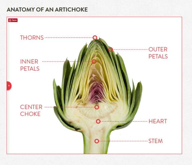 A diagram of the anatomy of an artichoke. It shows an artichoke cut in half, exposing the whole artichokes anatomy. From the top down, they are labeled as thorns, outer petals, inner petals, center choke, heart, and stem.
