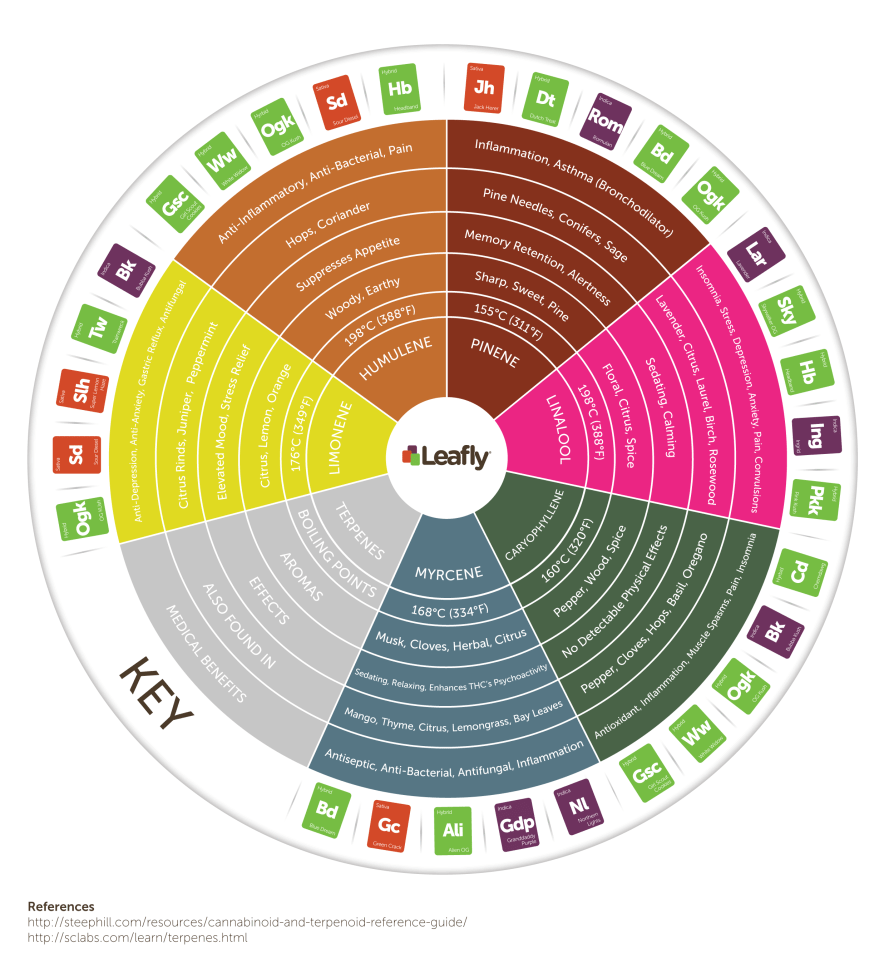 A chart in the shape of a pie with six different terpenes in the center, it organizes which terpenes boil at different temperatures, flavor, aroma effects, medicinal benefits, other plants that have similar terpenes and finally which strain of cannabis is associated with each terpene.