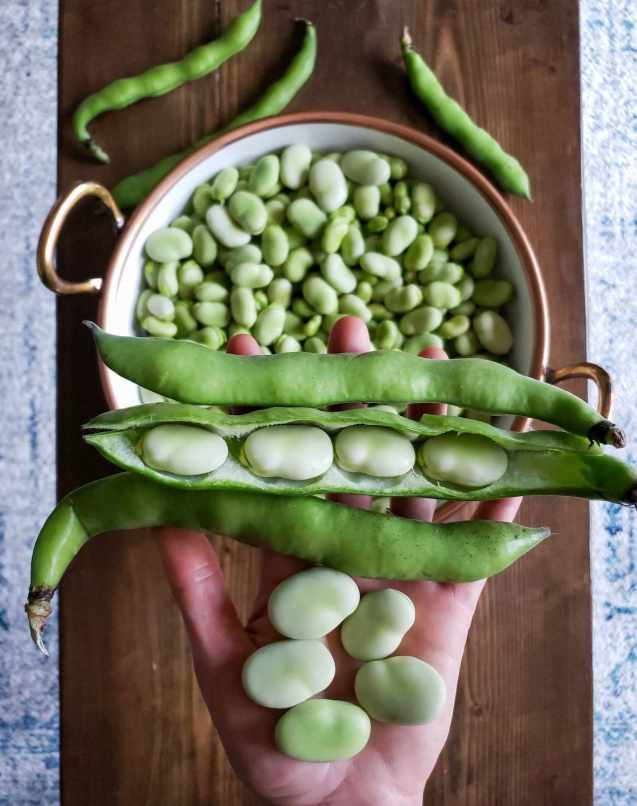 DeannaCat  is holding three large fava bean pods, one of them has been cut open to show the fava beans that are hidden below the green pod. There is also five large fava beans in here palm as the pods are being held by her fingers. In the background there is a white ceramic bowl with copper lined rim that is full of shelled fava beans. It is sitting o. a skinny barn wood coffee table with a few scattered fava bean pods surrounding the bowl.