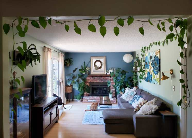 A room is shown of a house, the far wall contains a fireplace and mantle. There are houseplants scattered throughout the room, many large varieties in the far corners of the room, some hanging in each corner of the room, and one hanging plant has one of its vines strung across the length of a wall. There is a couch with a sectional on one side and two house cats sit in the middle of the image, one  on an area rug and another nearby on a cat scratcher that doubles as cat furniture.