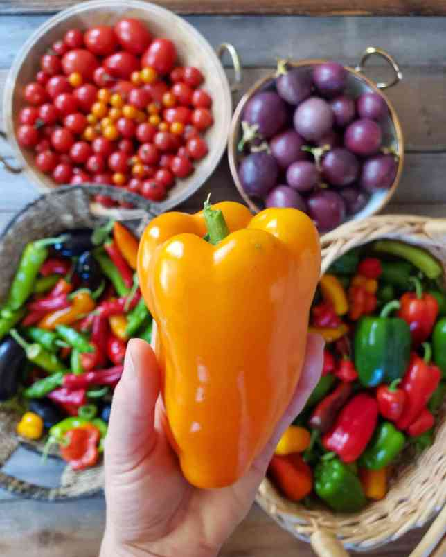 A hand is holding a Glow pepper which is bright orange in color. Below the pepper there are four different baskets or bowls that contain a variety of peppers, a bowl of tomatoes, as well as a bowl of passion fruit.