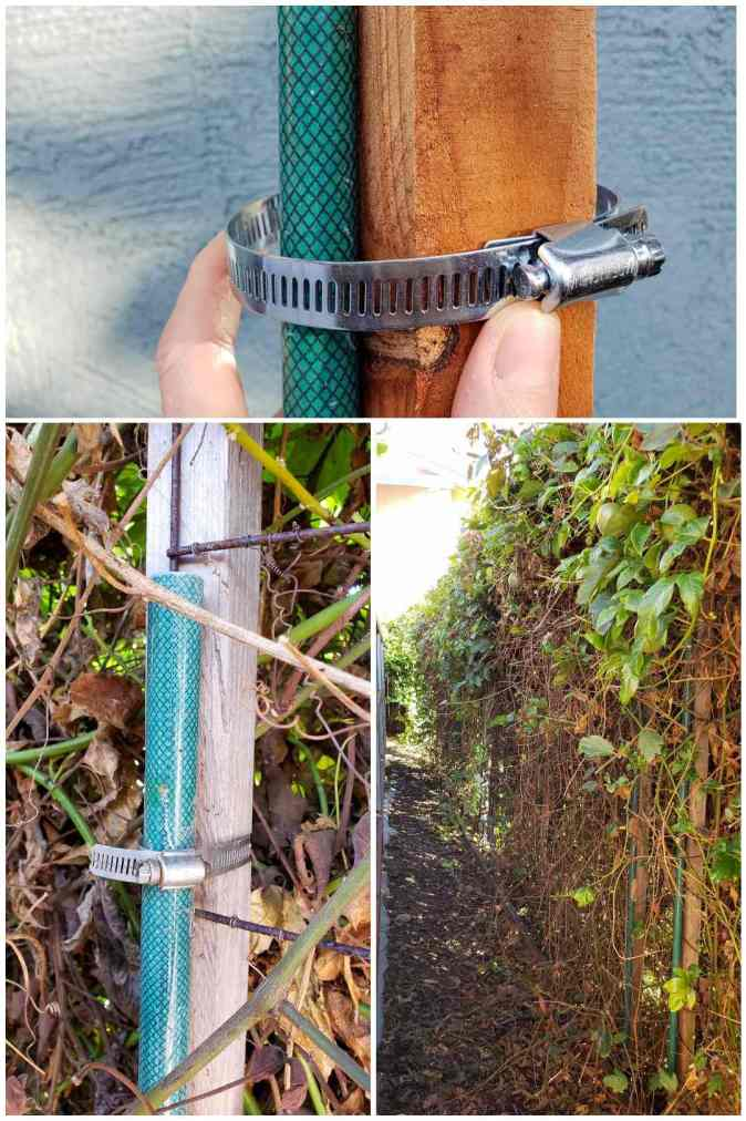A three way image collage showing how pipe clamps can be used to attach the green fiberglass stakes to the support structures. These combined hardware items help build a sturdy trellis.