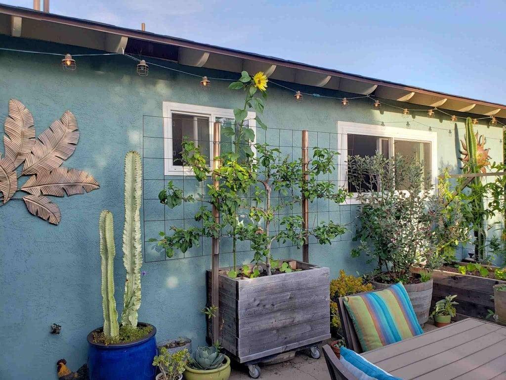a raised garden bed on concrete patio