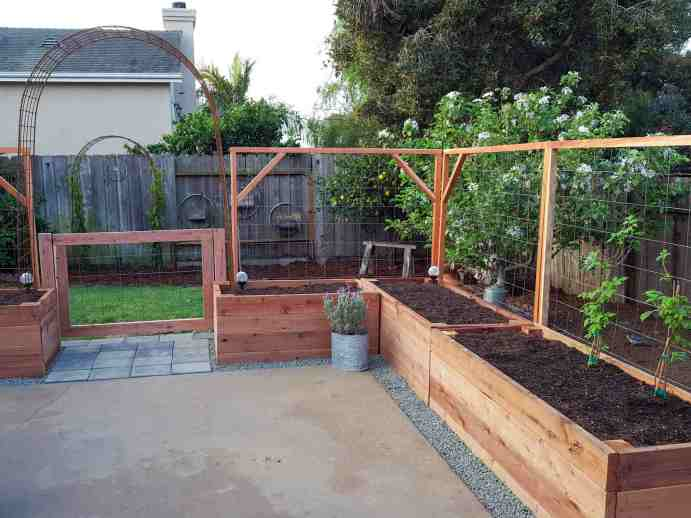 The backyard patio garden, the concrete patio area is surrounded by raised garden beds have been placed where grass once was, they each have a trellis attached to the back of each bed to act a s a fence from the outside chickens. There is a gate in the center that has an arch over the top to create a gateway.