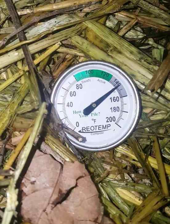 A close up image of a compost probe thermometer inside a hot compost pile, the temperature reads over 140 degrees Fahrenheit. That's how you make compost!