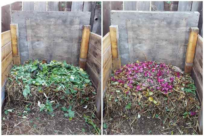 A two part image collage as a before and after photo. In the first image, a single compartment compost bin has a layer of green (nitrogen) plant material on the top layer. The second image shows the bin after a layer of brown (carbon) plant material has been layered on top of the previous green layer. One would continue to build the pile in this fashion to make compost.