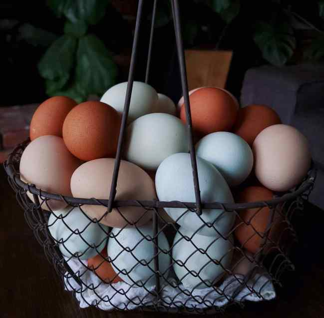 A wire basket is full of an assortment of fresh eggs. They range in color from light brown, to blue, to light green, to dark brown.