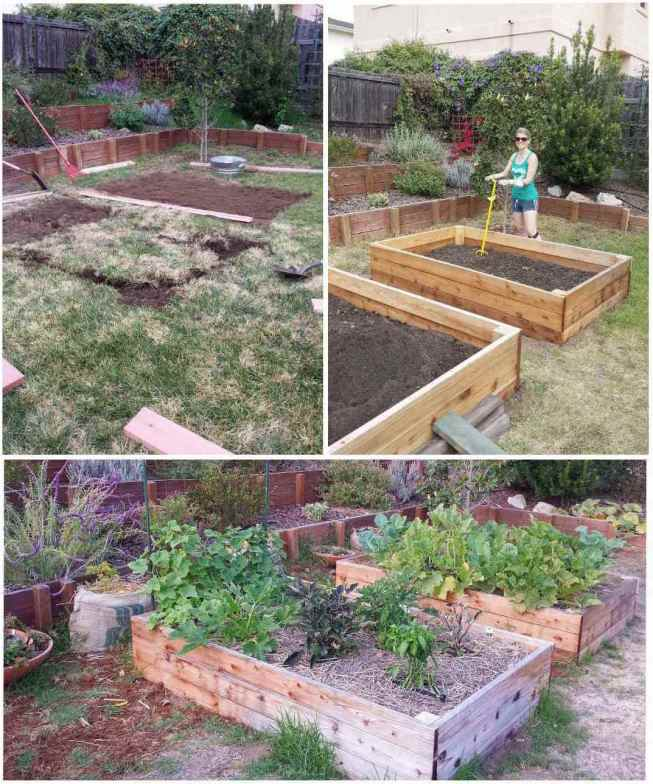 A three way image collage, the first image shows two rectangular plots in the process of having the lawn removed to fit raised garden beds. The second image shows the same area after two raised garden beds have been installed on the rectangular plots where the grass was removed. DeannaCat is standing next to one of the garden beds with a tiller inserted into the bed that is half full of soil. The final image the same garden beds after some time had passed. There are vegetables growing in the beds but weeds have started growing in the beds from the barren earth below.