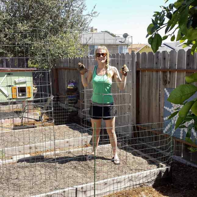 DeannaCat is standing inside of tomato cage that was made using concrete remesh. This cage was made using two pieces of remesh to make the tomato cage about six feet tall.