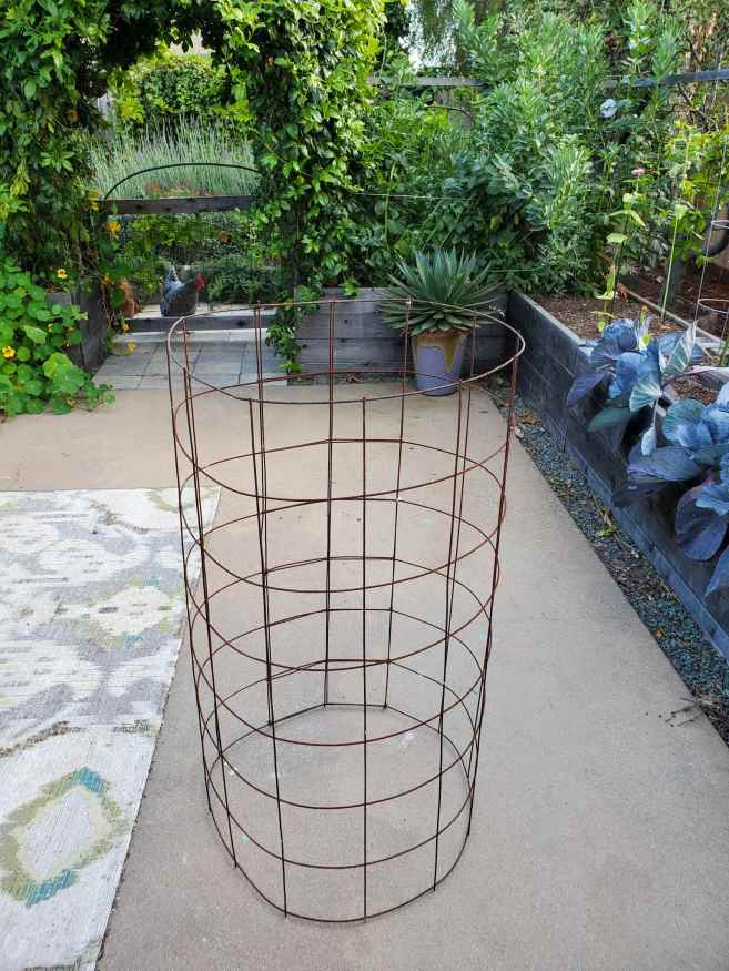 A newly made tomato cage is shown sitting on a concrete patio. In the background there is a chicken looking into the patio beyond a gate. There are lush green plants throughout the area, some in garden beds, others planted directly in the ground beyond.