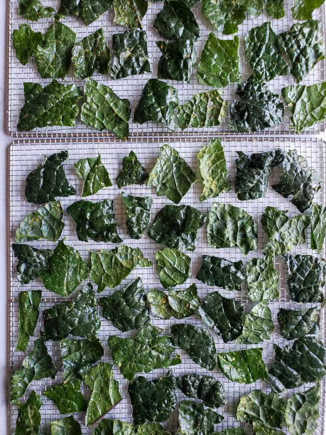 Two stainless steel drying racks are shown full of season kale pieces that are ready to be dried into chips. The pieces have space around each one, making sure to not overlap the pieces so they will dry evenly.