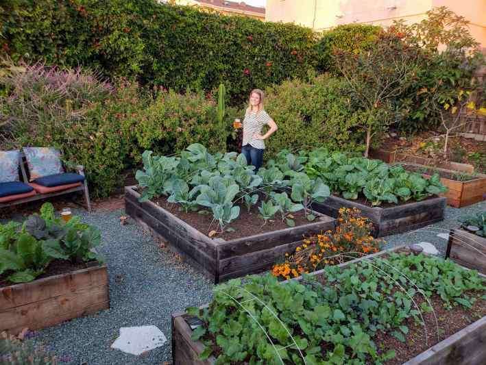 DeannaCat is standing next to her raised garden beds in the front yard, she is holding an adult beverage with her hand on her hip. The garden beds surrounding her are full of tender winter vegetables, kale, cauliflower, bok choy, asian greens, radishes, and swiss chard to only name a few. Directly behind here is a wall of flowering perennial bushes that have pink and purple flowers, a wall of passion fruit vines is just beyond that and there are various small trees scattered about the area. This is the start of a fall garden.