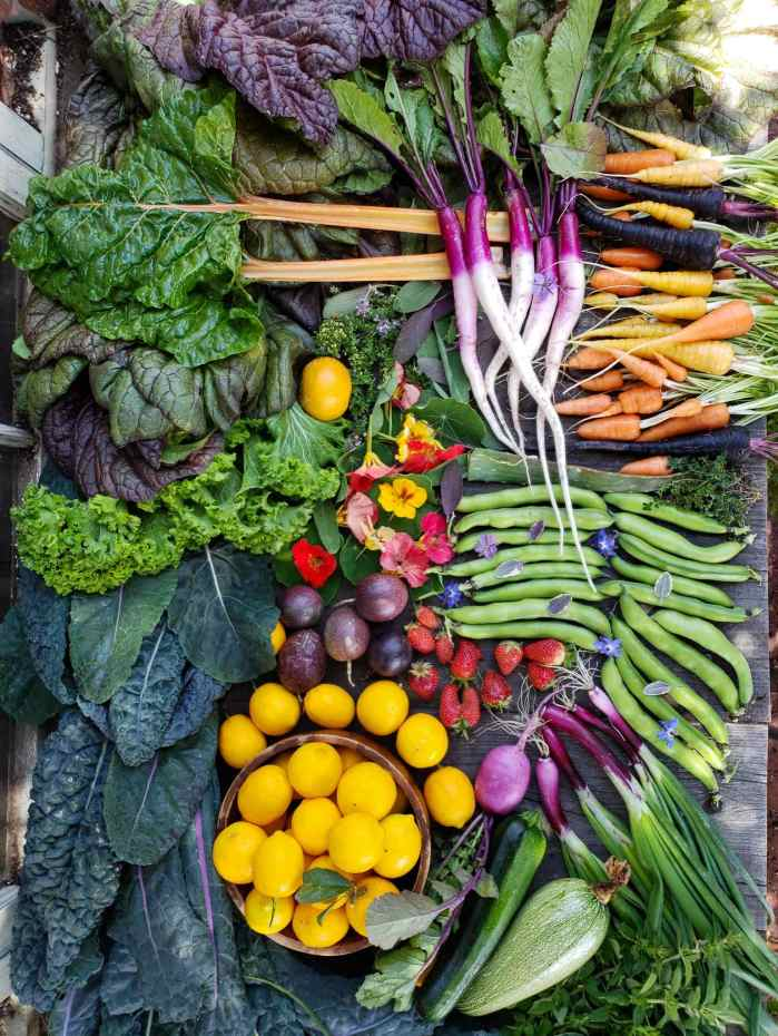 A bountiful harvest melange is shown from a birds eye view. There are kale leaves, bunching onions, squash, lemons, fava bean pods, strawberries, radishes, salad turnips, carrots, mustard greens, chard, carrots, nasturtium, and fresh herbs arranged in an artistic manner.