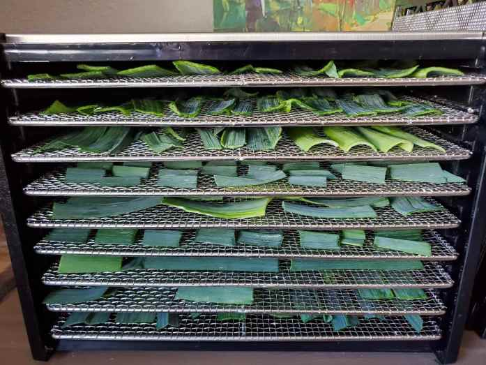 The front of an Excalibur dehydrator is shown without its lid on. It is a nine tray dehydrator and they are all inside and full of leek greens. The different shapes and colors of the leek green pieces are visible on the trays within.