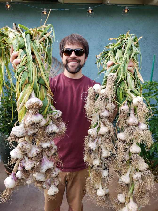 Aaron is holding two different braids of garlic, one softneck and one hardneck. In each hand there are at least 25 to 30 bulbs of garlic braided together by their greens. Aaron is wearing sunglasses, a maroon shirt, and dark khaki brown shorts.