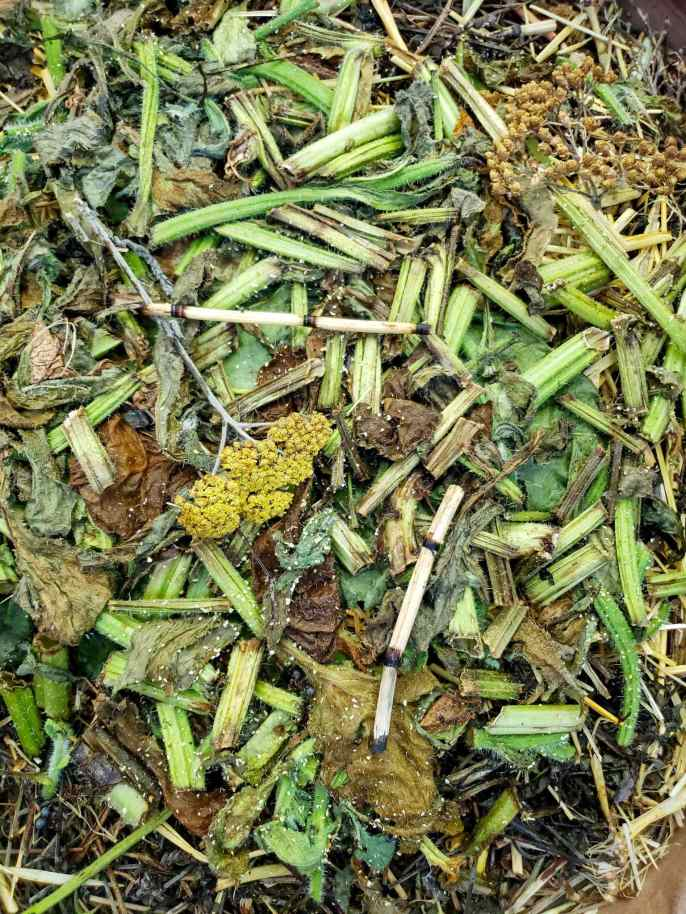 A close up image of green  mulch consisting of fava bean plants, horsetail, yarrow flowers and borage. Some of the mulch is still green in color while other parts have turned more brown.