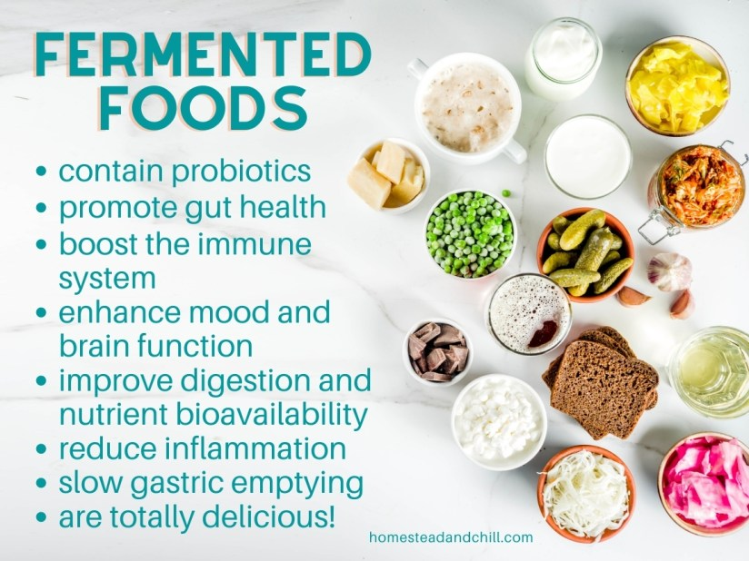 An image that shows some of the benefits of fermented foods in a bulleted list on the left while on the right there are various bowls and cups of fermented foods including cottage cheese, beer, bread, kraut, cheese, sourdough, and yogurt. A few of the benefits include probiotics, gut health, reduce inflammation etc.