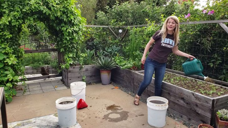 DeannaCat is watering a newly sprouted raised garden bed of radish seedlings with worm compost tea. There are three five gallon buckets that have been used to create an AACT. If you're unfamiliar with these gardening terms, review the gardening glossary for more information.