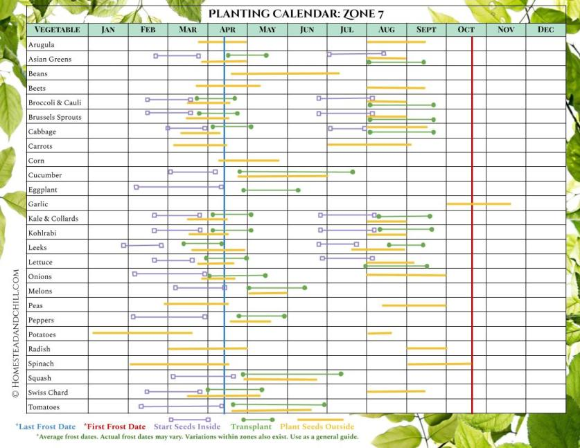 A planting calendar for Zone 7, it has many different vegetables lined up on the left side of the chart and all of the months of the year listed on the top of the chart. Each vegetable has different colored lines that correspond with when to start seeds inside, transplant outdoors, and plant seeds outside, along with corresponding last frost date and first frost date where applicable. The lines start left to right, showing what months you should do each particular task depending on the season and where you live. Another gardening term found in the gardening glossary.