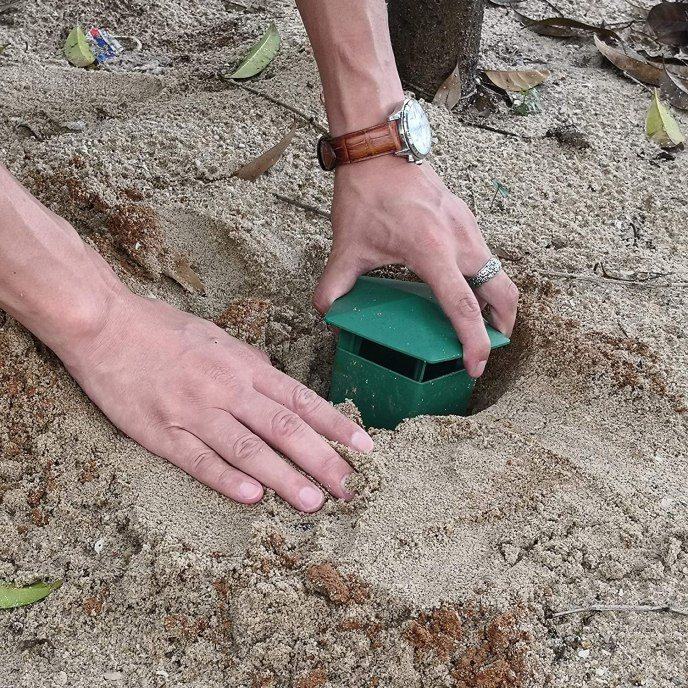 An image of a person slightly burying a special reusable snail trap filled with beer into the sandy soil. The trap is green and has a space on the top for snails and slugs to enter.