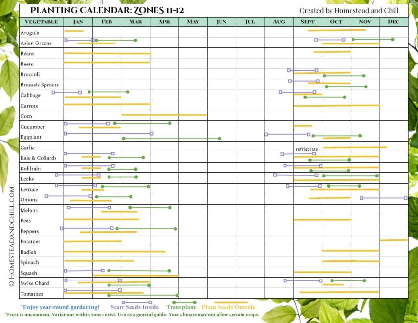 Learn when to plant seeds by using this planting calendar for Zones 11-12, it has many different vegetables lined up on the left side of the chart and all of the months of the year listed on the top of the chart. Each vegetable has different colored lines that correspond with when to start seeds inside, transplant outdoors, and plant seeds outside, along with corresponding last frost date and first frost date where applicable. The lines start left to right, showing what months you should do each particular task depending on the season and where you live.