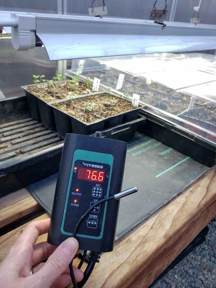 DeannaCat is holding a thermostat and temperature probe from a seedling heat mat. Beyond lies trays of seedlings and trays of soon to be sprouted seedlings that are covered with humidity domes until they germinate. Two T5 lights are hanging above.