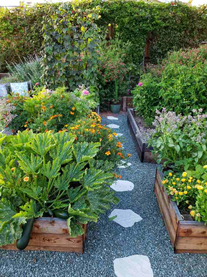 Raised garden beds overflowing with plants such as squash, calendula, borage, marigold, carrots, beans and tomatoes. The varied and bright colors of the flowers pop against the vibrant greens of the plants. Paver lined gravel pathways separate the raised beds. Beyond lies flowering perennials and a wall of trellised passion vines.