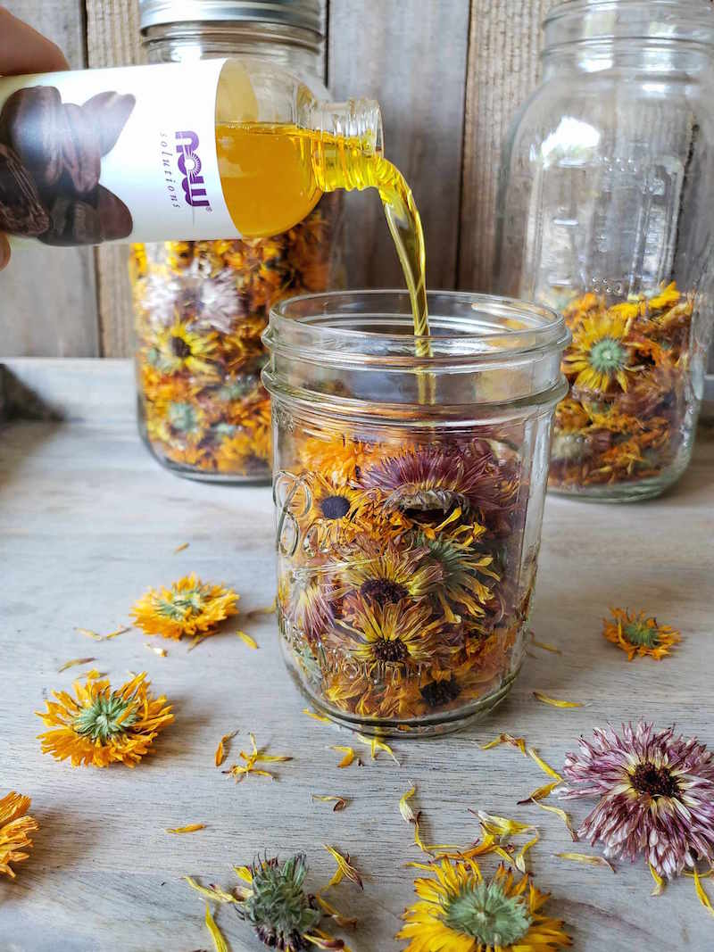 A pint glass mason jar is shown three quarters full of dried calendula flowers. A bottle of jojoba oil is being poured into the jar over the top of the flowers. There are various dried flowers scattered around the area along with two half gallon mason jars in the background. One is completely full and the other is half full of dried calendula flowers.