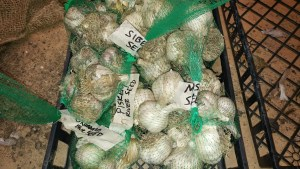seed garlic for planting a years supply