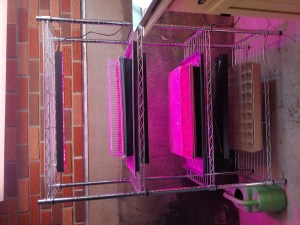 Homemade grow light stand for half the price of store-bought