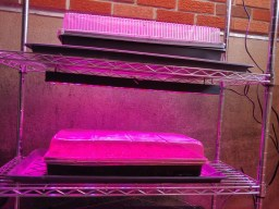 Build your own seed starting grow light shelf or system