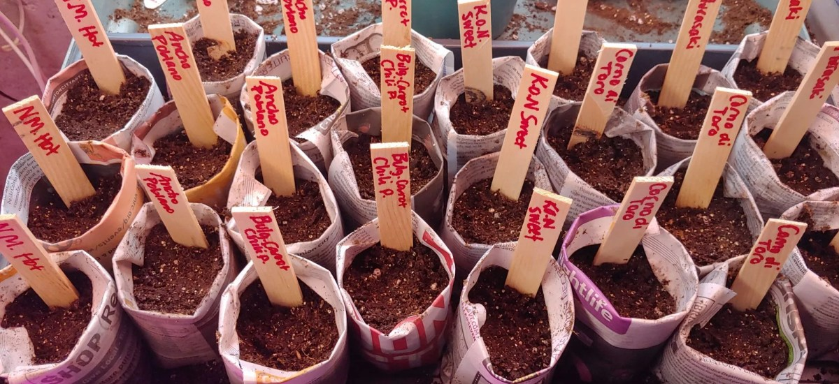How to Make and Use Newspaper Seed Starting Pots