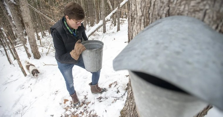 How to Collect & Store Sap for Maple Syrup