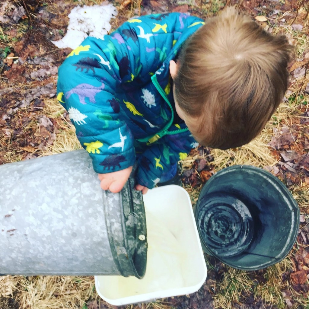 Child helping to collect maple sap