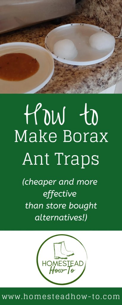How to make Borax Ant Traps PIN