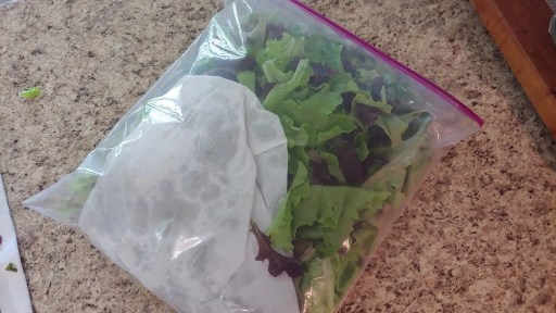 pack lettuce into a bag with a paper towel