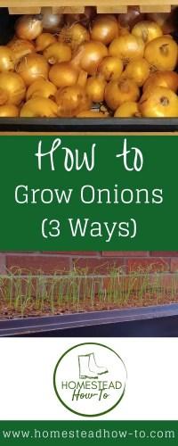 How to grow onions PIN