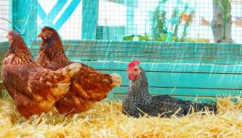 7 Tips For Heat Lamp Safety