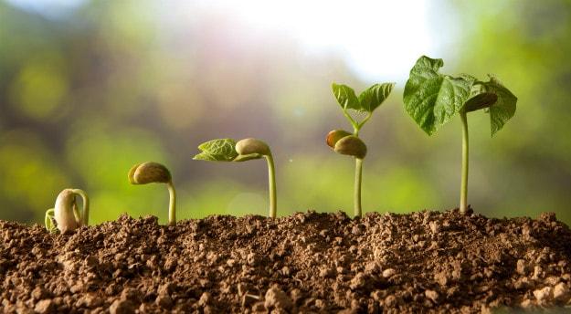 Companion Plants For Your Survival Garden beans