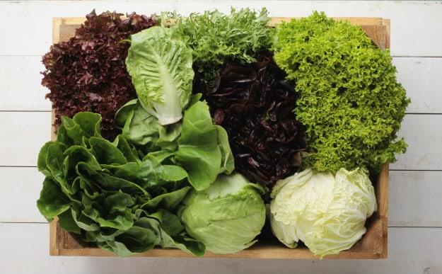 Companion Plants For Your Survival Garden lettuce