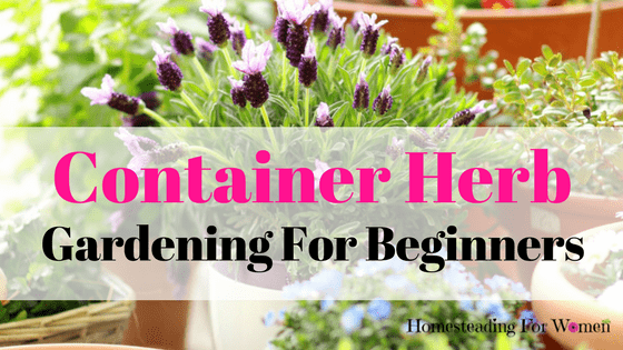 Container Herb Gardening For Beginners (2)