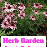 Herb Garden Secrets to success