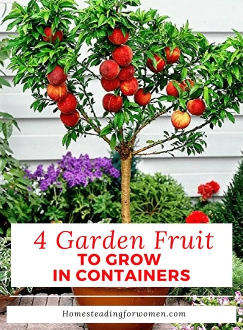 4 Garden Fruit To Grow In Containers Homesteadingforwomen.com