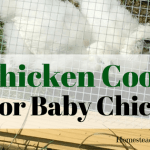 Chicken Coop For Baby Chicks