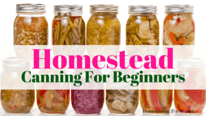 Best Canning Equipment For Beginners