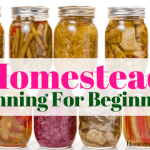 Homestead Canning Food For Beginners