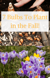7 bulbs to plant in the fall